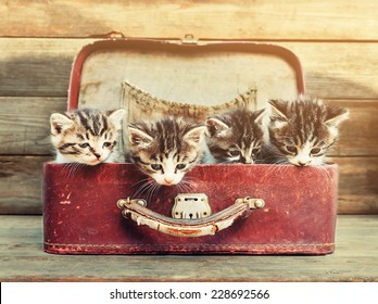 Four little kittens sitting in vintage suitcase on wooden background. Image with sunlight effect