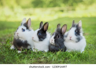 Four little rabbits sitting on the lawn in summer