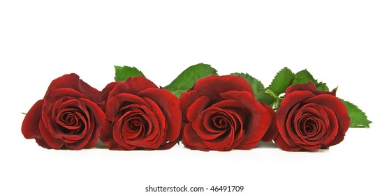 Four lovely red roses against a pure white background with space for  text