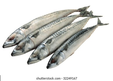 Four mackerel fish in a row isolated