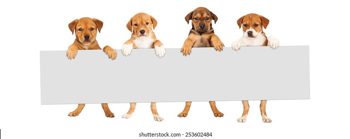 Four mixed Shepherd breed puppy dogs holding a blank sign to enter text onto