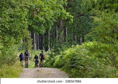 Four mountain bikers biking in a green forest in the Belgian Ardennes