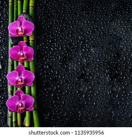 Four orchid with bamboo grove on wet black background