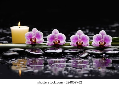 Four orchid with candle on therapy stones