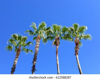 Four palm trees in a row against a bright blue sky, seen from below