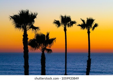Four Palm Trees Sunset Silhouette