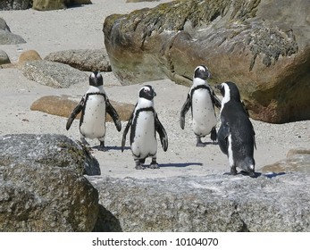 four penguins on the beach