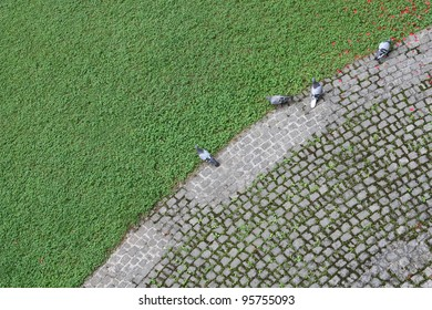 Four pigeons on the edge of the stone path.