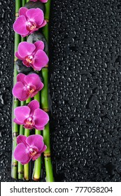 Four pink orchid with black stones ,bamboo grove on wet background