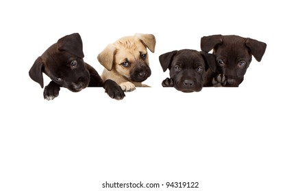 Four puppies hanging over a white banner. Add your own text to create a sign or marketing materials.