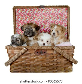 Four Puppies in a picnic basket