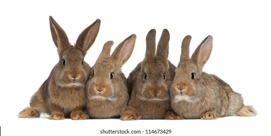 Four rabbits against white background