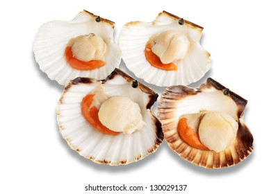 Four raw scallops isolated on white background with shadows