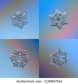 Four real snowflakes, glittering on smooth gradient background. Macro photos of star plate snow crystals with hexagonal symmetry, short, broad arms, glossy relief surface and complex inner details.
