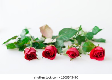 Four red rose and leaves on white background
