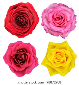 Four Rose Flowers Isolated on White Background