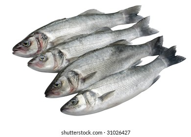 Four sea bass fish isolated on white