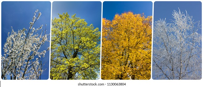 Four season collage from vertical banners with trees and blue sky.