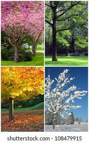 Four seasons collage: Spring, Summer, Autumn, Winter.