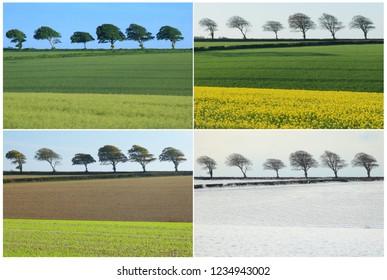Four seasons landscape collage