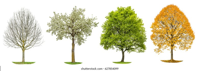 Four seasons of nature. Tree silhouette isolated on white background. Spring summer autumn winter