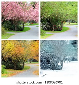 Four seasons photographed from the exact same location on a cherry tree lined street in Canada. Spring, Summer, Autumn and winter.