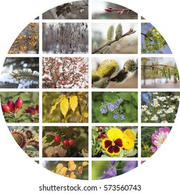 Four seasons round collage. Episodes of natural conditions in different seasons, fall, winter, spring and summer. The concept of geographic plant natural cycle.