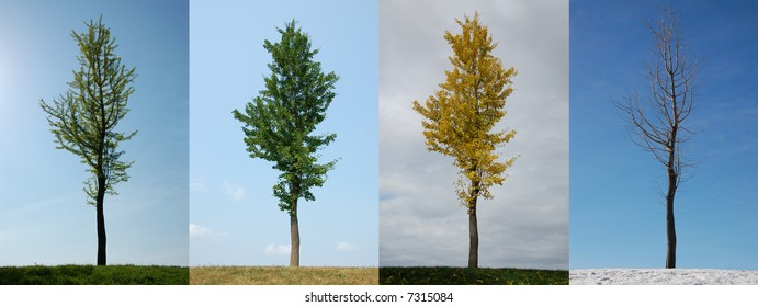 Four seasons.  Same tree in Spring, Summer, Autumn and Winter.
