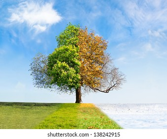 Four seasons tree time passing concept