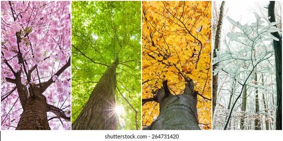 four seasons in the treetops - Shutterstock ID 264731420