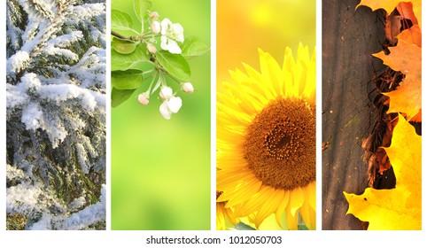 4 seasons images stock photos vectors shutterstock