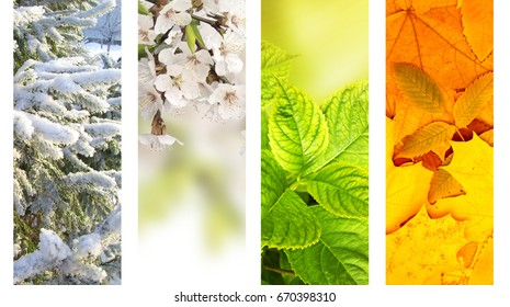 Four seasons of year. Vertical nature banners with winter, spring, summer and autumn scenes