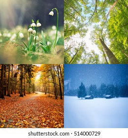 four seasons of year  - winter, spring, summer, autumn
