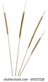 Four separated cattail stems. Very high-res. Clean edges, no shadows.
