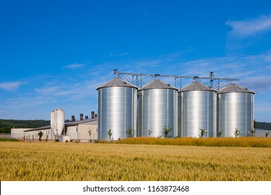four silver silos in corn field under blue sky