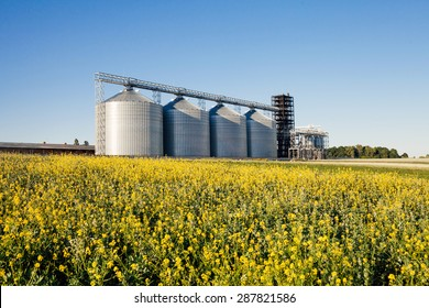 four silver silos in a wheat field