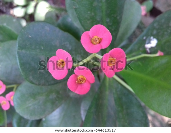 four small tiny pink flowers