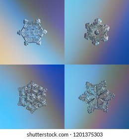 Four snowflakes glittering on blue gradient background. Set with macro photos of real snow crystals: star plates with fine hexagonal symmetry, ornate arms, glossy surface and complex inner details.