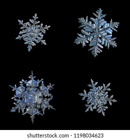 Four snowflakes isolated on black background. Macro photo of real snow crystals: elegant stellar dendrites with complex, ornate shapes, glossy relief surface, hexagonal symmetry and thin, long arms.