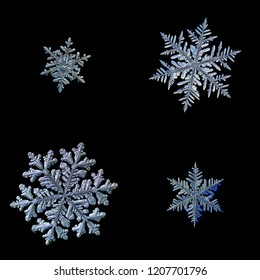 Four snowflakes isolated on black background. Macro photo of real snow crystals: elegant stellar dendrites with ornate shapes, glossy relief surface, hexagonal symmetry and complex inner details.