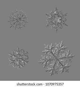 Four snowflakes isolated on uniform gray background. Macro photo of real snow crystals: large stellar dendrites with complex, ornate shapes, hexagonal symmetry, long elegant arms and glossy surface.