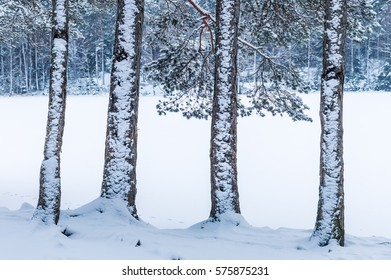 Four snowy fir trunks in front of a snow-clad lake.