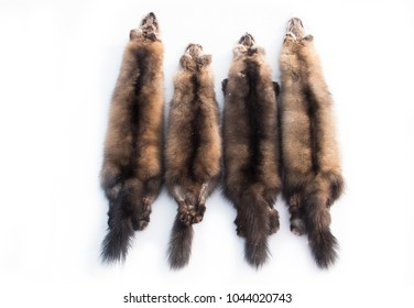 Four soft, luxurious, silky natural fur skins (pelts) of Russian barguzin sable of different shades of brown, laid out on snow white background. Tanned sable fur is valued in the fashion industry