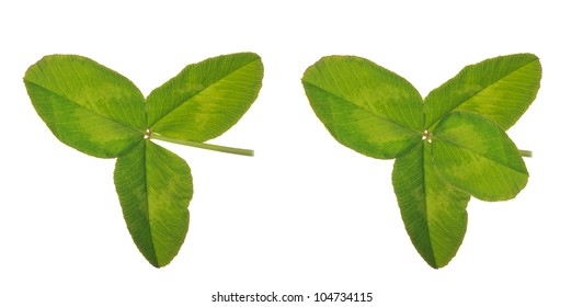 four and three element clover leaves isolated on white