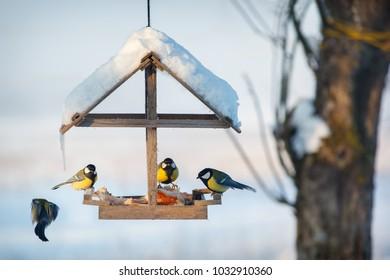 Four tit in the snowy winter bird feeder eating pork fat