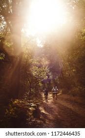 Four trail runners run toward the early morning sun through a woodland trail