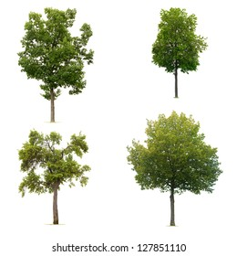 Four trees collection isolated on white background