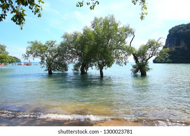 Four trees growing in the cost of Thailand surrounded by water and big rock mountain