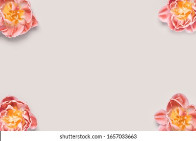 four tulip heads in the corners on a beige background. Place for your text, tinting image