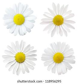 four white flowers
